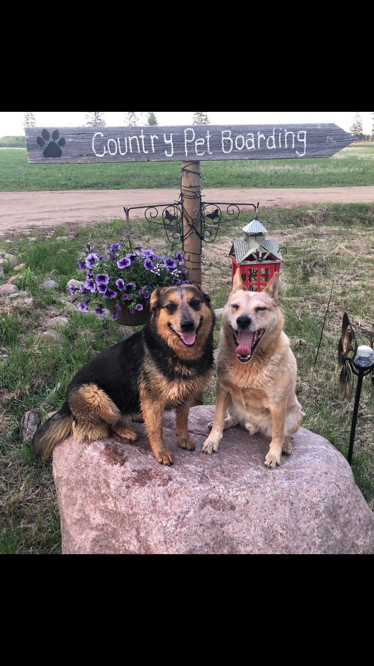 Country Pet Boarding & Collars